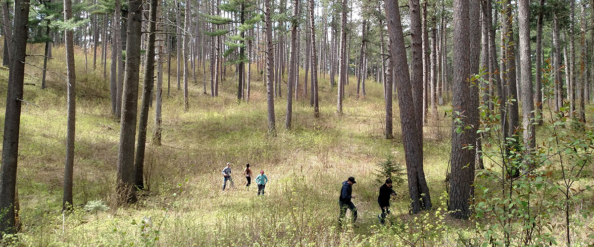 five people exploring a forest